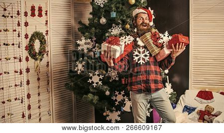 Santa Claus Man With Present Box At Christmas Tree. Christmas Man With Beard On Happy Face Hold Gift
