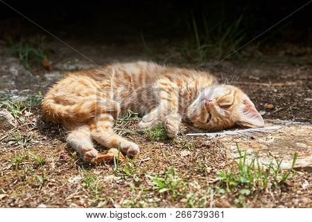 Relaxed Cat Resting On The Floor And Watches The Photographer
