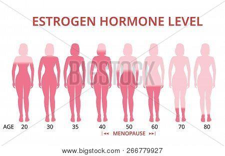 Estrogen Hormone Levels Chart, Menopause, Vector Infographic