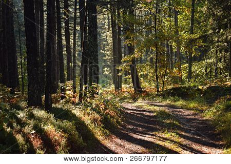 Morning Light In Forest Nature. Lonely Road In Forest Nature. Sunlight In Forest Nature After The Ra