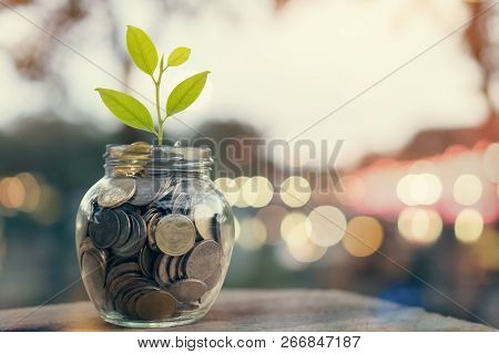Plant On Pile Coins In The Bottle, Money Growing Concept And The Goal Success.