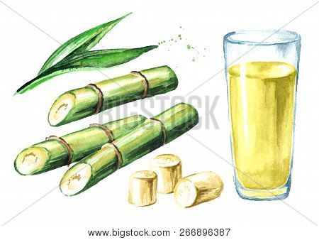 Sugar Cane Juice With Drinking Glass, Leaves And Cut Pieces Cane Set. Watercolor Hand Drawn Illustra