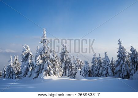 Beautiful winter nature with firs in the snow. Forest landscape. Sunny weather with haze poster