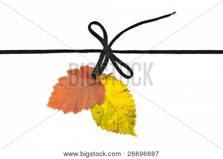 Black shoelace,bow with autumn leafs
