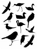 Twelve bird black silhouettes flying or resting poster