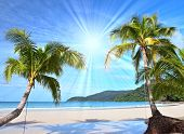 Shining sun on nice beach with palm trees poster