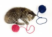 A kitten takes a nap after playing with a ball of yarn. This kitten is one of several being raised on a farm in central Illinois. poster