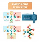 Amino acids structure vector illustration. Labeled example of Serine molecule diagram. Closeup with hydrogen, side chain and carboxyl group. Protein builders that are life sustaining macronutrients. poster