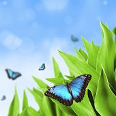 Beautiful blue exotic butterfly on green leaves poster