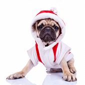 front view of a cute pug puppy dressed as santa on white background poster