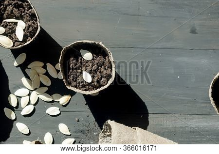 Girl Is Plants Seeds In A Peat Pot On The Table, Household Plants And Many Peat Pots, Scattered Soil