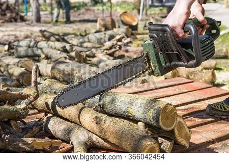 Man Sawing A Tree With A Chainsaw. Removes Forest Plantations From Old Trees, Prepares Firewood.