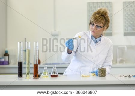 Female Chemical Scientist Inspects Hemp Terpenes Crystal In Laboratory. She Is Using Tweezers And Wa