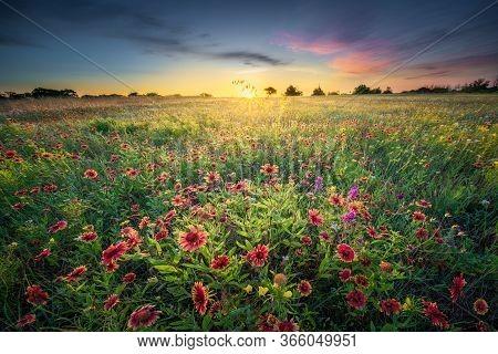 Fiield Of Colorful Spring Wildflowers In Rural Texas