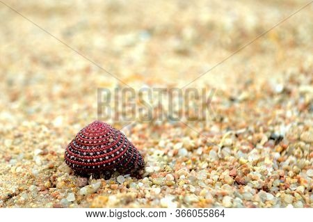 Beautiful Colorful Seashell On Beach Sand. Red, Black And White Seashell On Yellow Pastel Sand. Beac
