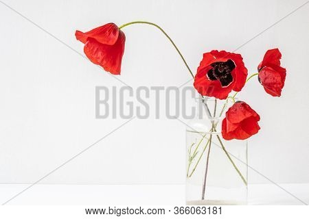 Four Red Poppies In Glass Vase On White Background. Remembrance Sunday Concept.