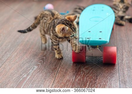 Cute Bengal Kitten Playing With Blue Plastic Skateboard