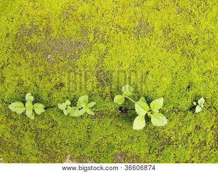 Green Moss On Ground With Plant