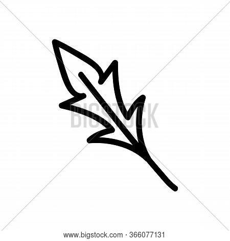Variety Of Arugula Leaf Icon Vector. Variety Of Arugula Leaf Sign. Isolated Contour Symbol Illustrat