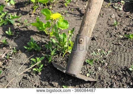 A Close-up Hoe That I Use To Weed The Garden. Concept Of Agriculture.