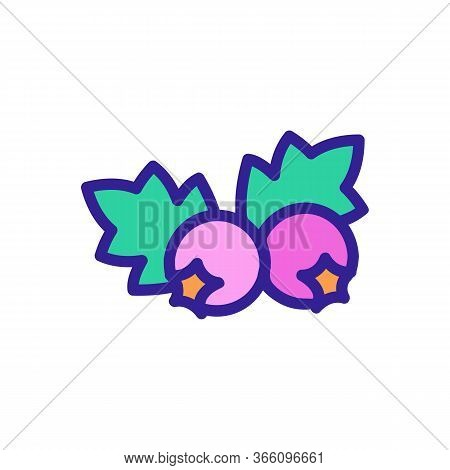 Organic Hawthorn Berries Icon Vector. Organic Hawthorn Berries Sign. Color Symbol Illustration