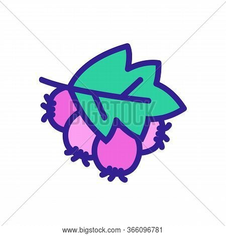 Leaf Covered Hawthorn Berries Icon Vector. Leaf Covered Hawthorn Berries Sign. Color Symbol Illustra