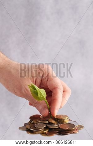 Green Sprout Sprouts From A Stack Of Coins On A White Background. Hand Picks A Seedling. Isolated. I