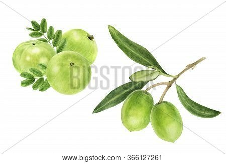 Closeup Indian Gooseberry Fruits Amla With Leaf And Olive Set Watercolor Illustration Isolated On Wh