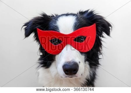 Funny Studio Portrait Of Cute Smiling Dog Border Collie In Superhero Costume Isolated On White Backg