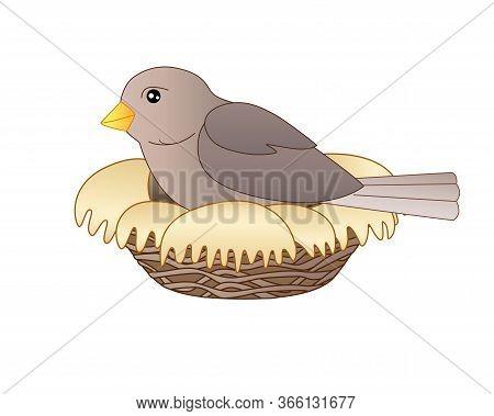 Bird Sits On A Nest - Vector Linear Full Color Vector Illustration. A Small Bird - A Sparrow Hatches