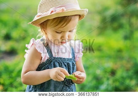 Portrait Of Child Girl Eating Pea Pod Outdoors.