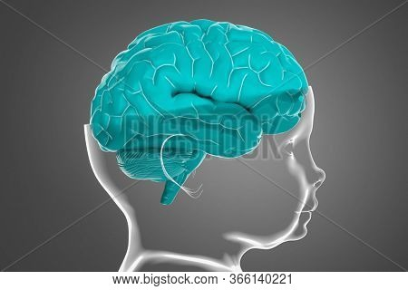 Model of the child's head and brain. Conceptual 3d illustration that can be used in many fields of science and medicine