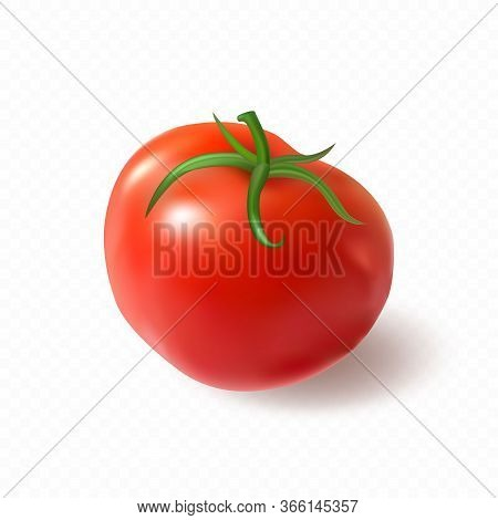 Big Red Juicy Ripe Tomato Isolated On Transparent Background. Premium Vector.