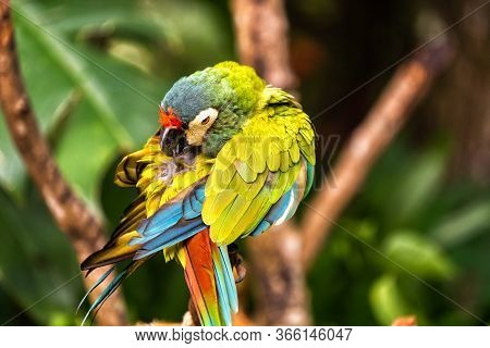 A Pied Little Parrot In The Aves National Park In Brazil.