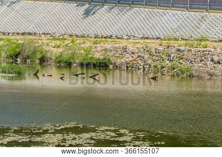 Logs Protruding From Surface Of Water In River With Concrete Wall In Background.