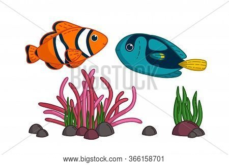 Colorful Tropical Fishes With Anemone. Blue Surgeonfish And Clownfish Swimming Together. Vector Illu
