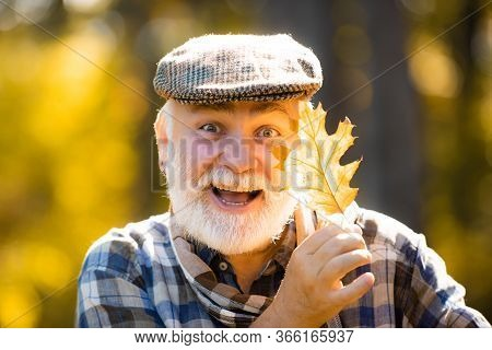 Happy Grandfather Holding Yellow Leaf Over Autumn Leaves Background. Grandfather Having Fun In Autum