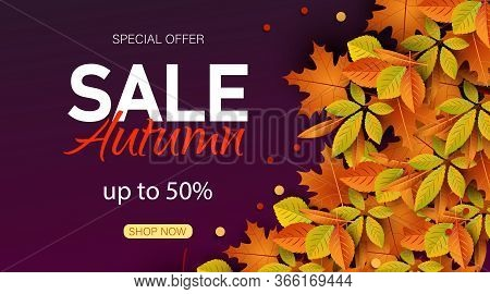 Big autumn sale. Autumn sale vector background. Autumn Sale Background with falling leaves, Web Banner, shopping sale or seasonal poster, Postcard and Invitation card. Vector illustration.