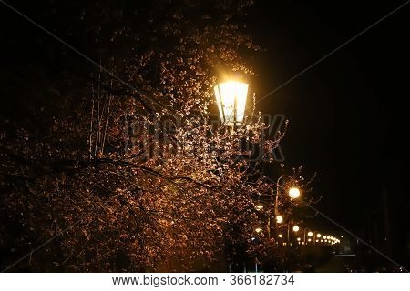 Historic Lamps In The Tree Alley Of The Town Of Pribor, Birthplace Of Sigmund Freud, Czech Republic