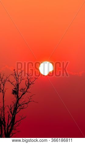 Beautiful Silhouette Dead Tree And Red Sunset Sky And Clouds. Romantic And Peaceful Scene Of Big Sun