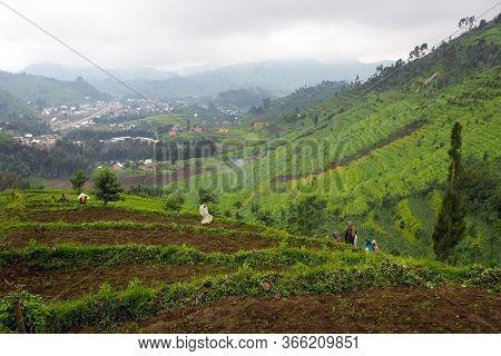 12 July 2019 - Kisungu, Rwanda: Subsistence Farmers In Central Africa, Rwanda, Harvesting Potatoes