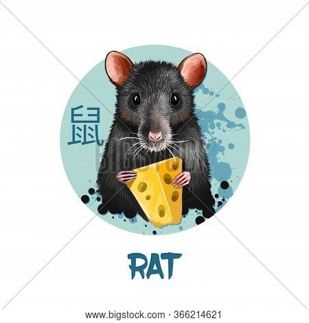 Rat Chinese Horoscope Character Isolated On White Background. Symbol Of New Year 2020. Pet Animal In