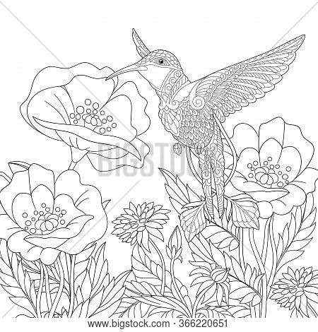 Coloring Page. Coloring Picture Of Beautiful Hummingbird And Poppy Flowers. Line Art Design For Adul