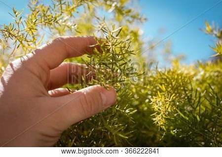 Man Hand Holding Green Plant With Blue Sky On The Background Home Garden Concept