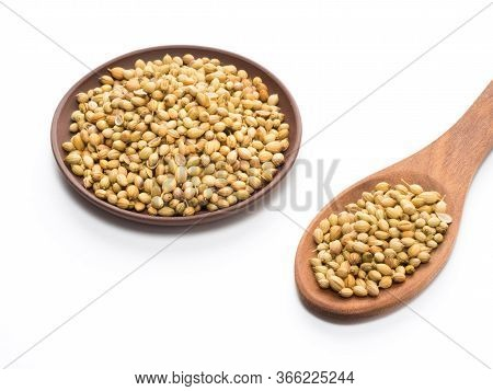 Spice Coriander (coriandrum Sativum) Seeds In Clay Plate And Wooden Spoon Isolated On White Backgrou