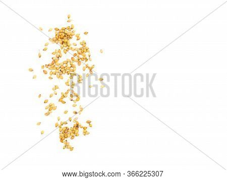 A Bunch Of Coriander (coriandrum Sativum) Seeds On White Isolated Background. Healthy Eating Concept