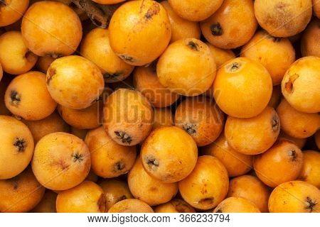 Pile Of Freshly Picked Ripe Juicy Bright Orange Medlar Loquat Fruits At Farmers Market. Local Homegr