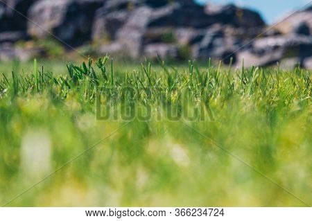 Closeup Of Grass On Background Of Rocky Terrain Dof