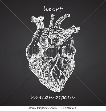 Heart. Realistic Hand-drawn Icon Of Human Internal Organs On Chalkboard. Engraving Art. Sketch Style