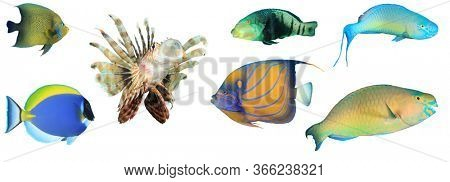 Sea fish isolated. Collection of reef fish cutout on white background. Angelfish, Wrasse, Lionfish, Surgeonfish and Parrotfish